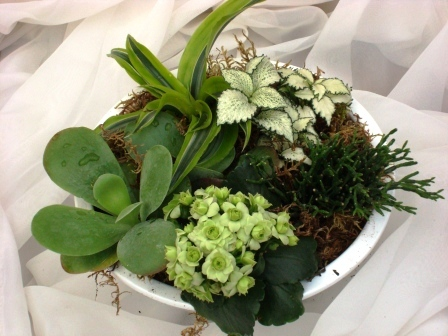 Modern Plantarrangement in pot