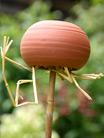 Oorwormpot op stok