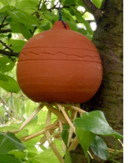 Oorwormpot hangend