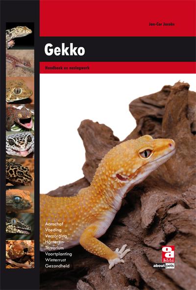 Gekko (NL)