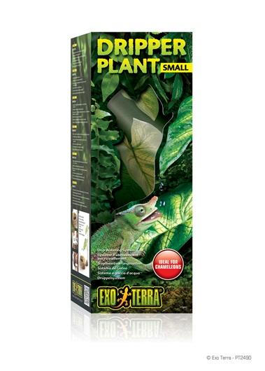 Dripper Plant