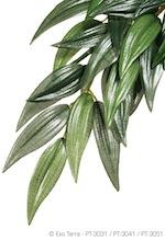 Silk Plant Ruscus