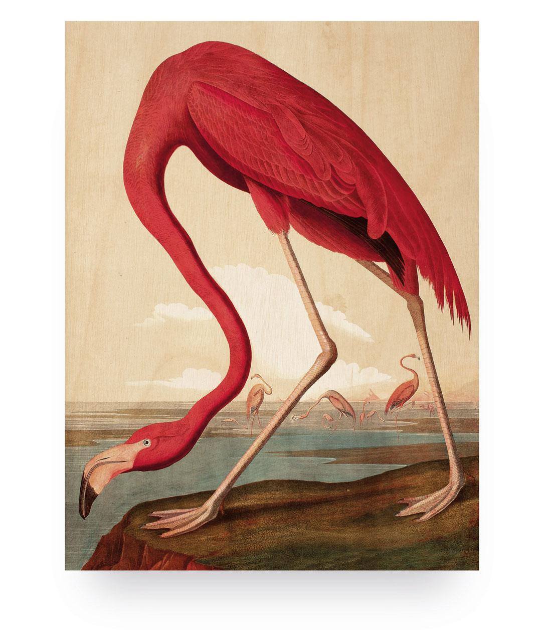 Flamingo M