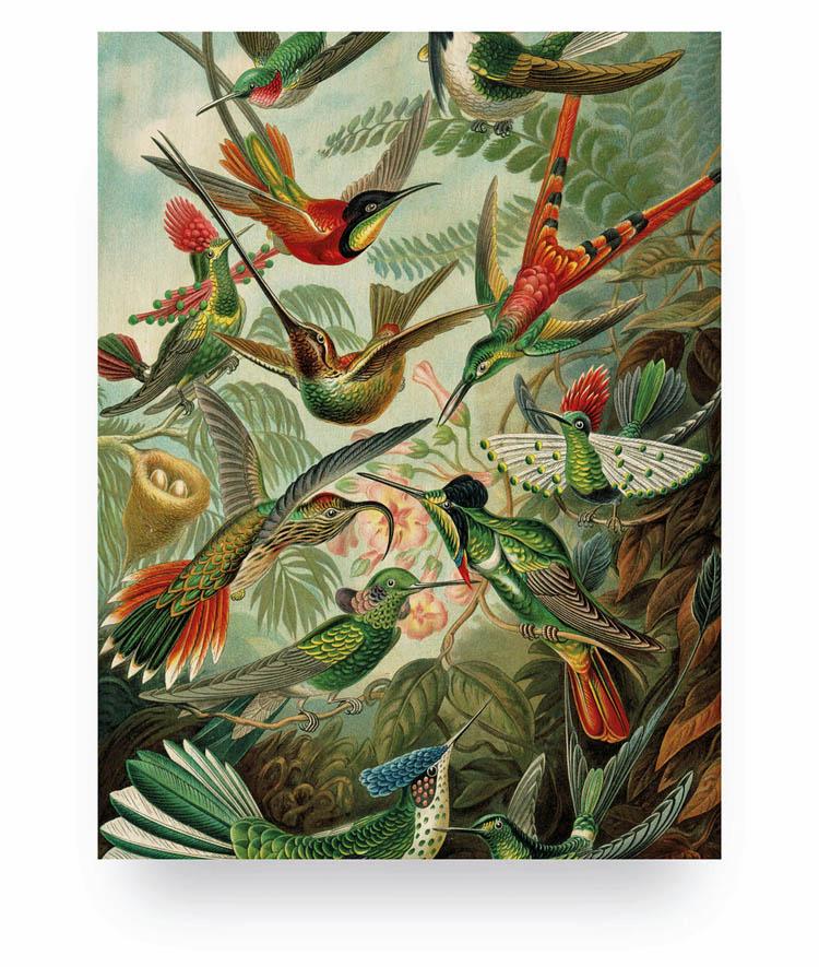 Exotic birds M