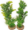 Plant Groen