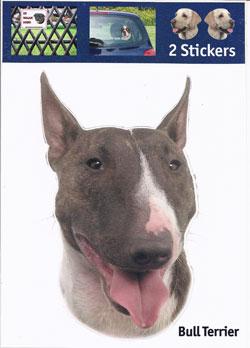 Kop Bull Terrier
