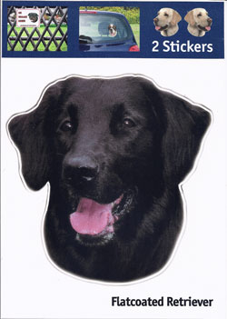 Kop Flatcoated Retriever