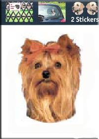 Kop Yorkshire Terrier