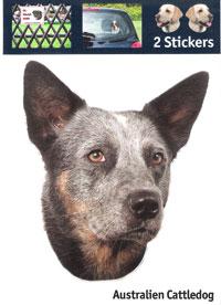 Kop Australian Cattledog