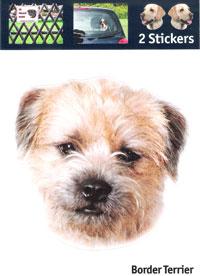 Kop Border Terrier