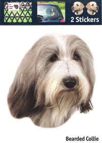 Kop Bearded Collie