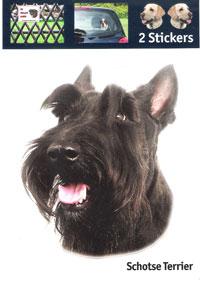 Kop Schotse Terrier