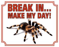 Break in make my day Tarantula
