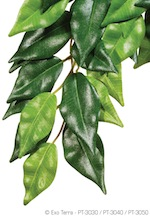 Silk Plant Ficus