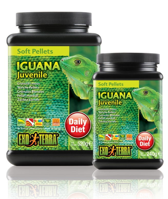 Iguana Juvenile