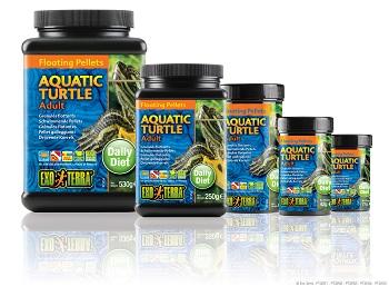 Aquatic Turtle Adult