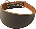 Whippet halsband