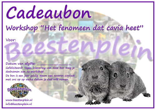https://myshop-s3.r.worldssl.net/shop5460500.pictures.Cadeaubon_Workshop_Cavia.jpg