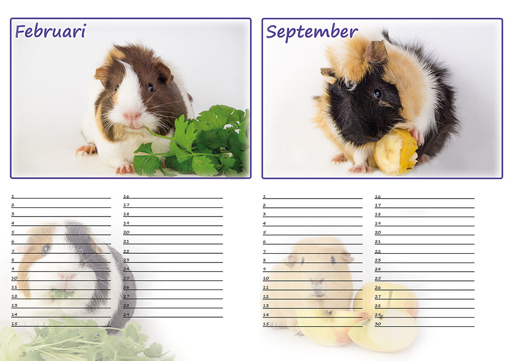 https://myshop-s3.r.worldssl.net/shop5460500.pictures.Preview_kalender_cavia.jpg